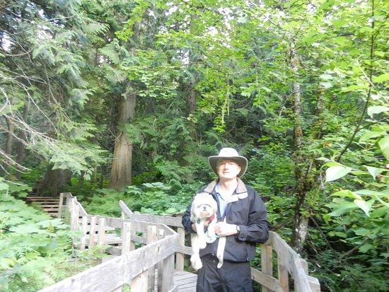 Giant Cedars Boardwalk Trail: Trail makes a loop through a rainforest.
