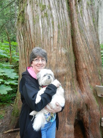 Giant Cedars Boardwalk Trail: Good photo opportunities.