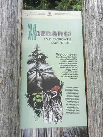 Giant Cedars Boardwalk Trail: Easy to travel boardwalk.