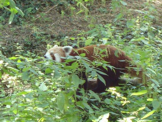 ch teau haviland au parc zoo du reynou 87110 le vigen photo de parc zoo du reynou limoges. Black Bedroom Furniture Sets. Home Design Ideas