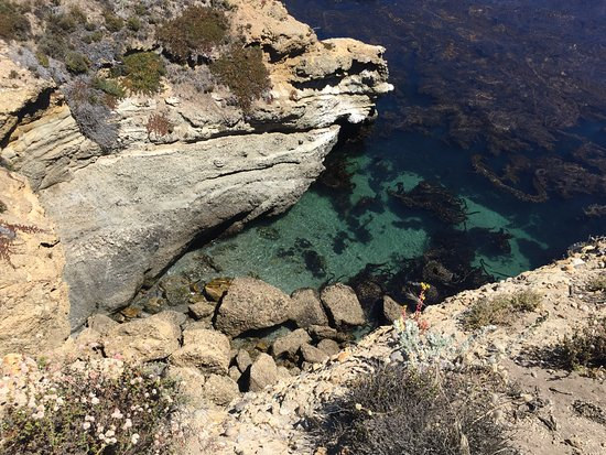 Point Lobos State Reserve: Point Lobos lagoon