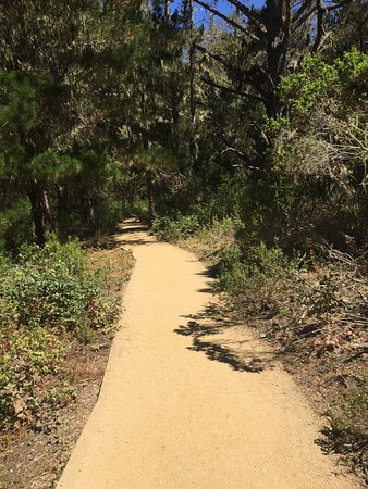 Point Lobos State Reserve: trails at Point Lobos