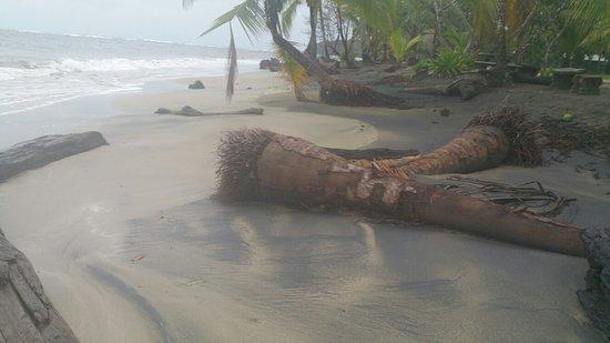 Manzanillo, Costa Rica: 20160715_064552_large.jpg