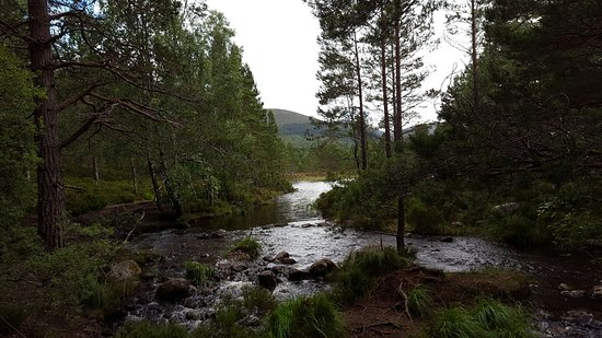 Aviemore, UK: 20160725_153838_large.jpg
