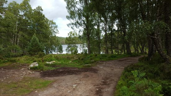Aviemore, UK: 20160725_153001_large.jpg