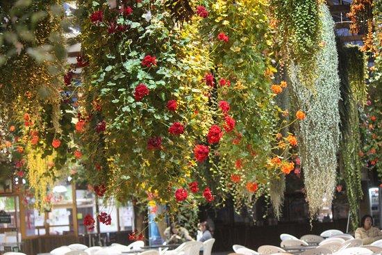 Kobe, اليابان: フクシャ。立ち木ベコニヤ。ブ-ゲンビリア。インパチエンスなど種類が多く最高の癒しの場になります。