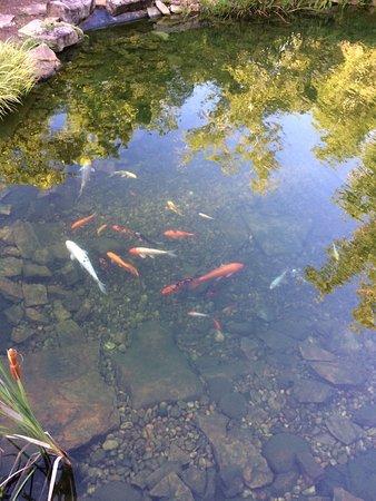 Dothan, AL: Asian garden Koi Pond
