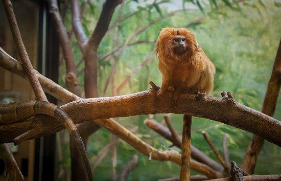 Norristown, PA: Monkey