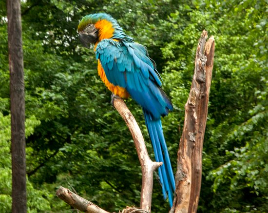 Norristown, Pennsylvanie : Tropical bird