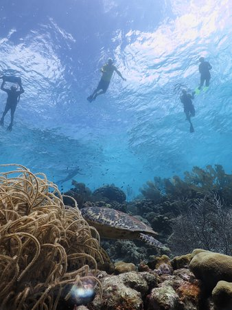 คราเลนดิจค์, โบแนร์: lots of sea turtle sights