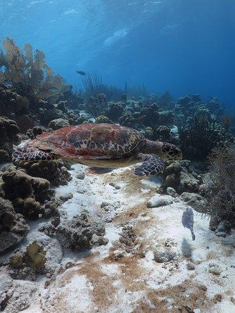 คราเลนดิจค์, โบแนร์: beautiful coral