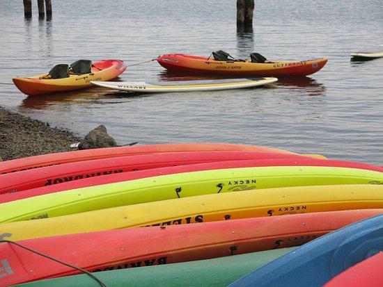 Quinault, Waszyngton: Kayaks para rentar