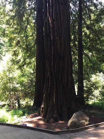 Mill Valley, CA: Muir Woods National Monument