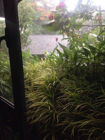 Sepilok, Malasia: photo4.jpg