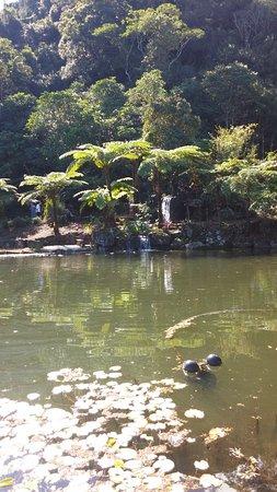 Maleny, Австралия: Pond one of many