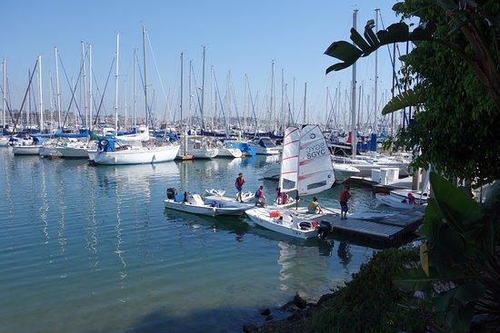 BEST WESTERN PLUS Island Palms Hotel & Marina: Scenery