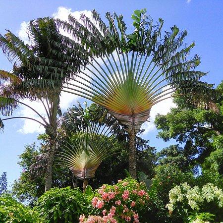 Десе, Гваделупа: IMG_20160723_085756_large.jpg