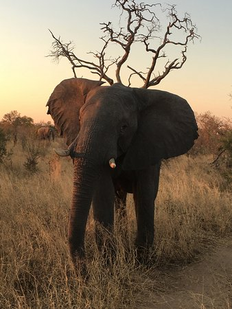 Hwange National Park, Zimbabve: Elephant from evening game drive