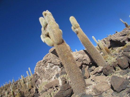 Uyuni / isla de cactus