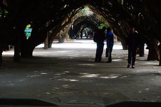 Algiers, Algeria: Inside the gardens under the tree arches.