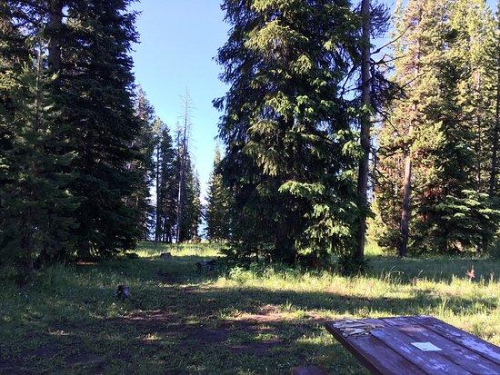 Bridge Bay Campground: photo1.jpg