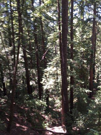 Boulder Creek, CA: photo1.jpg