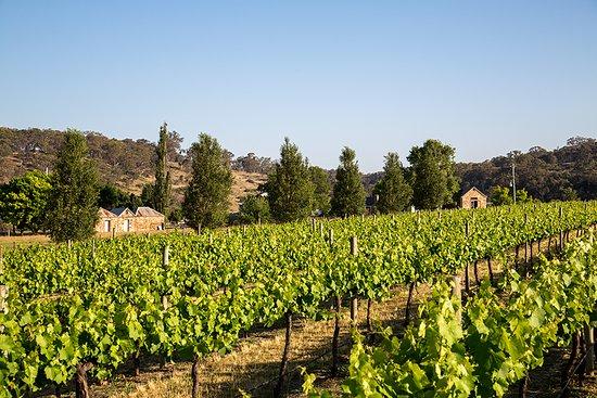 De Beaurepaire Wines