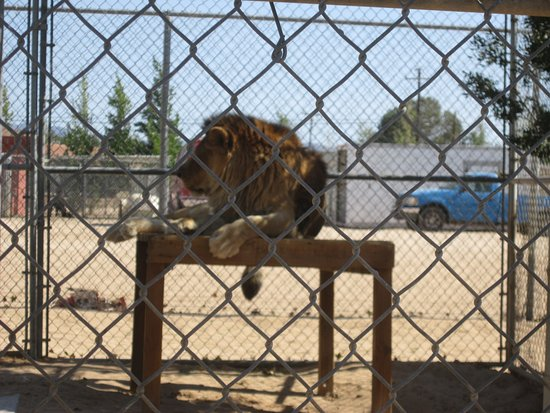 Hesperia Zoo Photo