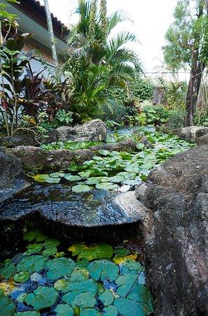 Aruna Senggigi: Beautiful ponds with water lilies everywhere in garden.