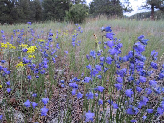 Allenspark, CO: Flowers in the meadow