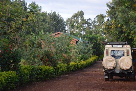 Karatu, Tanzanya: Junction Driveway
