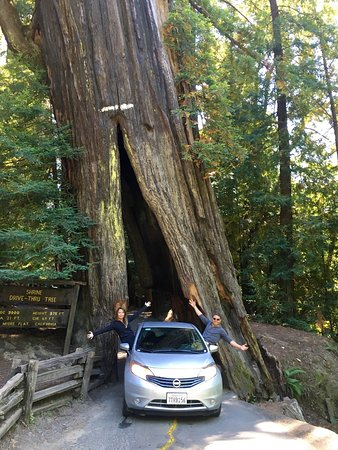 myers flat Park headquarters and the visitor center are located on the avenue of the giants,  state route 254, between the towns of weott and myers flat—45 miles south.