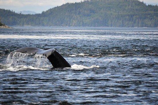 Telegraph Cove, Canada : A Whale of a Tale