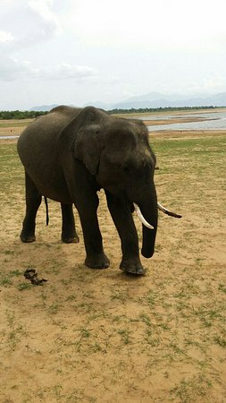 Uda Walawe National Park, Sri Lanka: Kavisha Safari service udawalawe