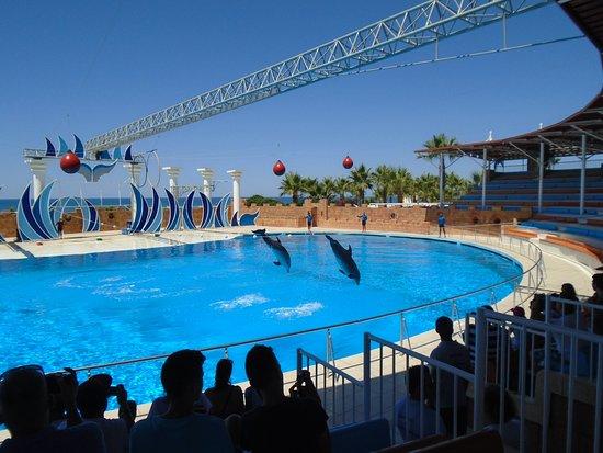 Окюрсалар, Турция: Csodálatos volt látni, amint ezek az okos delfinek végrehajtották a feladataikat!