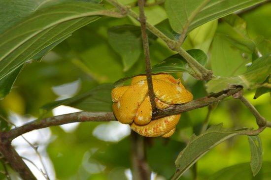 Cahuita, คอสตาริกา: serpiente