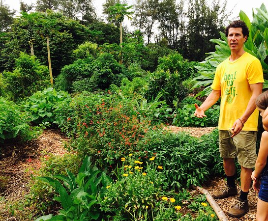 Kilauea, ฮาวาย: Doug is a wealth of knowledge about medicinal herbs.