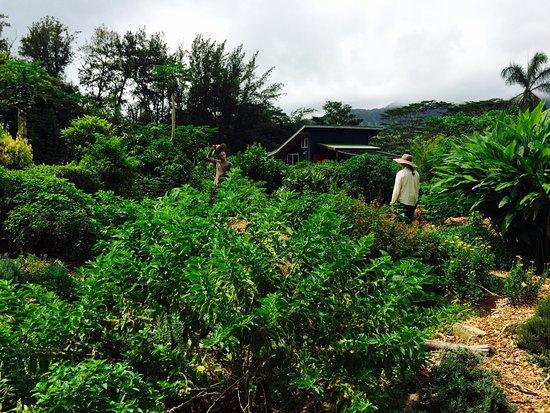 Kilauea, HI: Beautiful, tropical, garden haven!