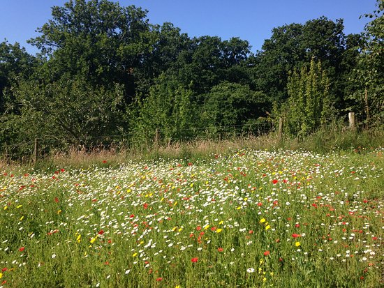Charmouth, UK: wildflower meadows