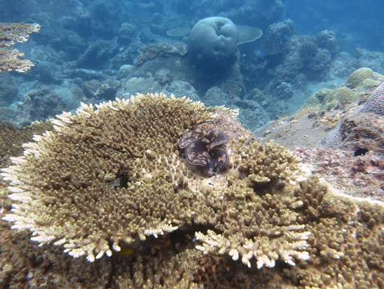 Kuala Besut, Malaysia: coral formations