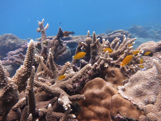 Kuala Besut, Malaysia: coral formations and fishes
