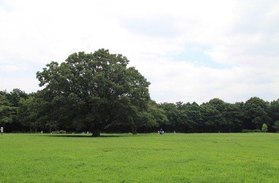 Zama, Ιαπωνία: 芹沢公園の広場