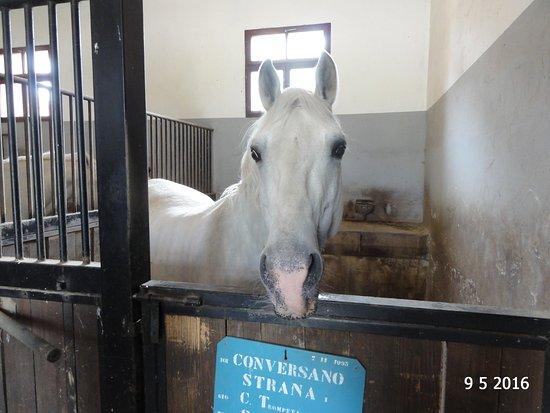 Λίπιτσα, Σλοβενία: In the stables