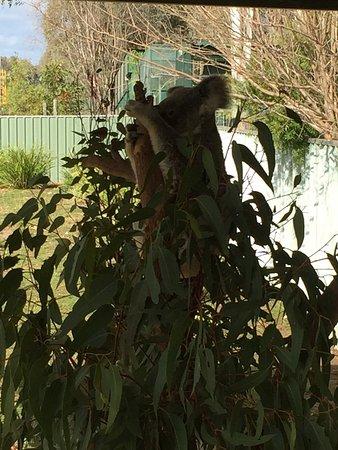 Gatton, أستراليا: photo2.jpg