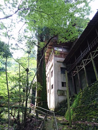 Shikokuchuo, Ιαπωνία: 本堂への石段