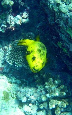 Island Divers : P1080352_large.jpg