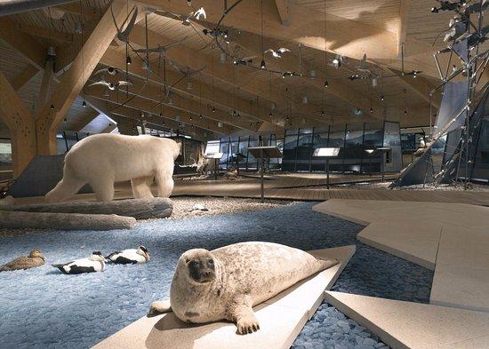 Svalbard museum - Picture of Svalbard Museum, Longyearbyen - Tripadvisor