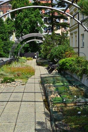 Brno, Czech Republic: rostliny na střeše