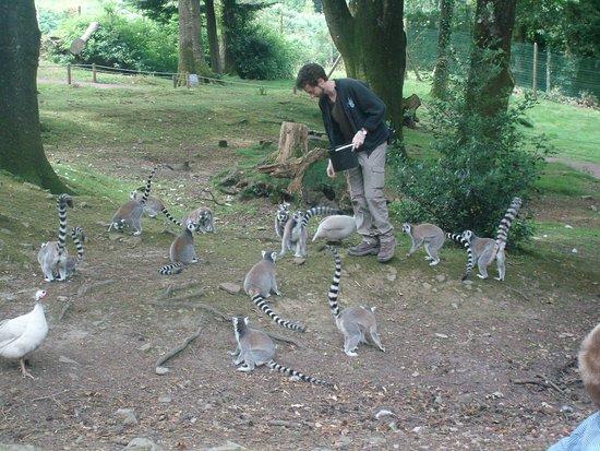 Jurques, Fransa: l enclos des lémuriens