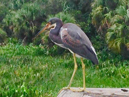 Boynton Beach, FL: Perfect Pose